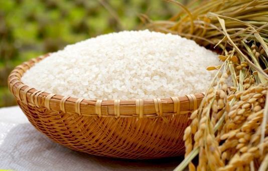 お米の精米を行い、生産管理などを行います