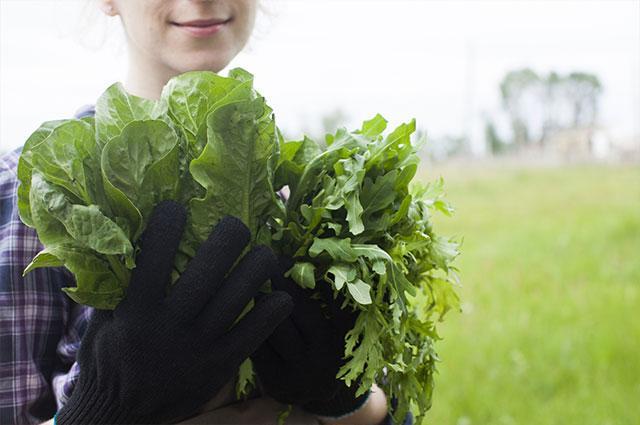 農業で外国人採用をする際のポイントとは