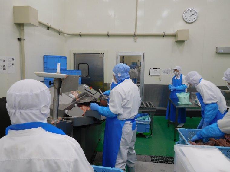 マグロの加工工場でのお仕事です!!