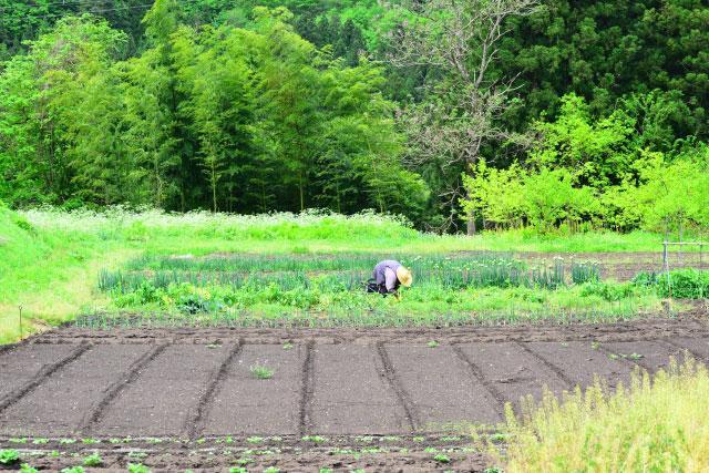 農業問題を解決するには外国人採用が適している理由とは