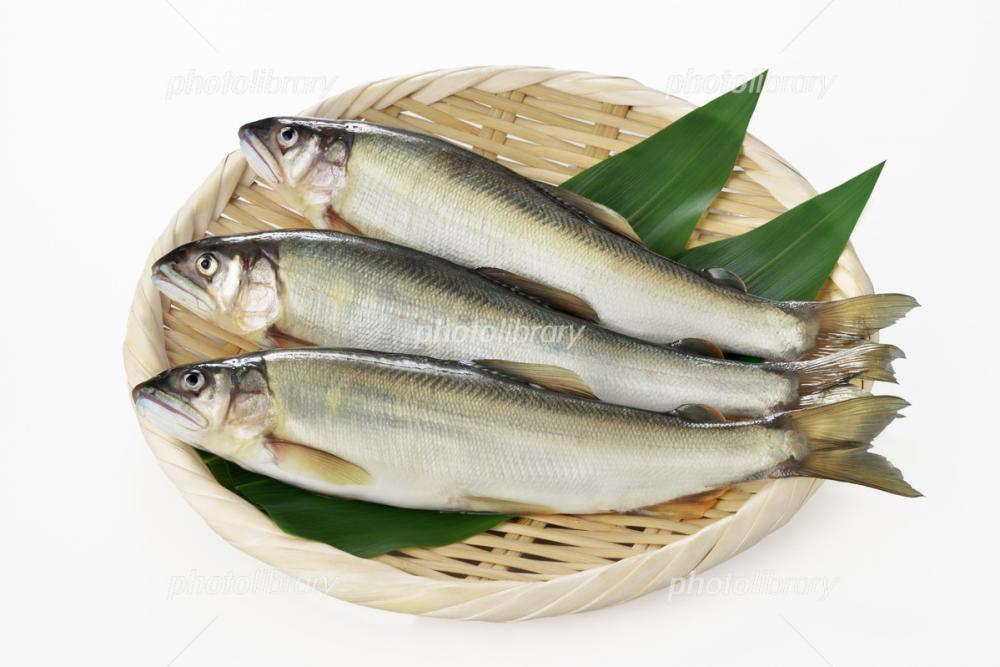 岐阜県の鮎を養殖するお仕事です!!